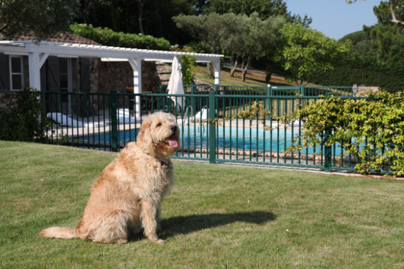 woody_grimaud france