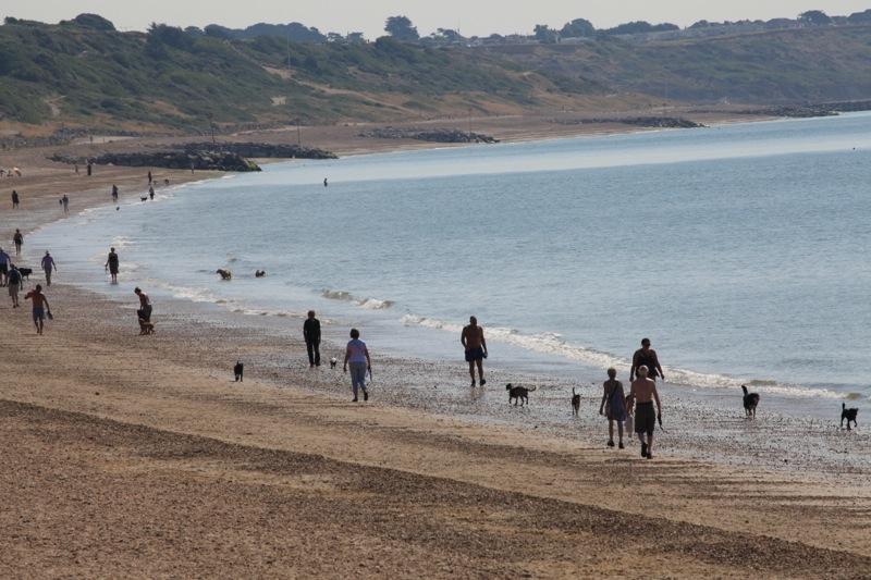 dog beach1